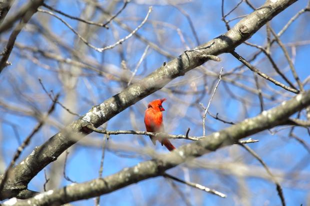 Cardinal_realreality productions_2016_03_29