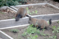 GroundHogs2_realreality productions_2016_05_01