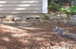 Squirrel2a crop