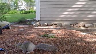 Squirrel3 crop