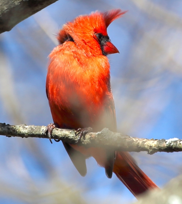 Cardinal_realreality productions_2016_03_29 copy